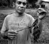 Freshwater shrimp caught in the nearby stream. IMG_7546.jpg