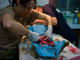 Surgery for a large tumor in a local dog. July 8th.  L1016265.jpg