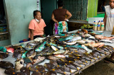 Fresh caught reef fish. L1019303.jpg