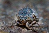 Cicada IMG_7857.jpg