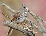 Sparrow's, Fox  3/17/2012