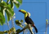 Oiseaux du Panama - Birds of Panama 2011