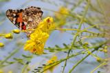 Float like a butterfly!