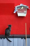 Sylvester & Tweety  :-)