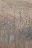 BLUE # 2