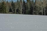 020  SNOWBALLS