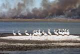 Pelicans & Aransas Burn