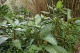Botanical Gardens: Greenery