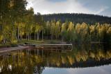 Käränkälampi: Birches and Reflection