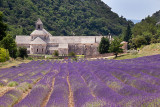 Lavender Fields and Abbey