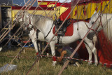 A Passing Circus