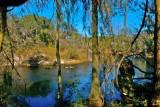 Suwanee River bend