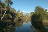 Suwanee Wildlife Refuge Creek