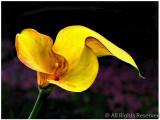Color Print-A-Open-Flowing Floral