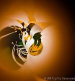 A-Assigned-Hummingbird's View