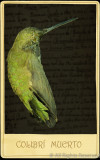 AA-Assigned-Colibri Muerto