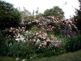 Gertrude Jekyll Flower Bed