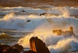 Comoronts on an angry sunset sea _MG_5742.jpg