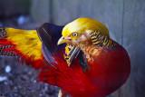 Colorful bird _MG_6066.jpg