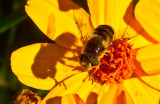 Black bug black shadow _MG_0938.jpg