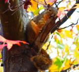 Shy squirrel_MG_9978.jpg