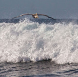 Air surfing  _MG_5681.jpg