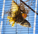 Bird as art _MG_4845.jpg