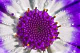 Flower  _MG_1715.jpg