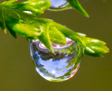 World in a water drop _MG_7927.jpg