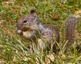Tiny squirrel  _MG_2376.jpg
