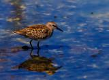 Bird on blue _MG_6288.jpg