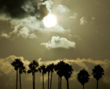 California Sun_MG_0641.jpg