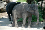 Singapore Zoo 1