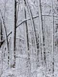 Winter Wonderland with the G9