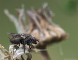 Fly Stack.jpg