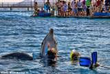 Uri, Dolphin Reef Eilat, 2011