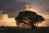 Sunset on Golf course, Shefayim