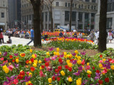Spring time in Chicago 3
