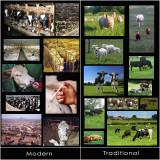 Livestock (stock photo collage)