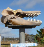 Head whale