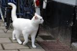 Cat Moves I
