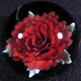 Red Rosey, Red Rosey Size: 1.71 Price: SOLD
