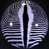 Grevy's Zebra Size: 3.57 Price: SOLD