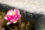 FLOWER 2011