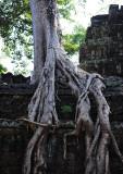 Ta Phohm temple.Siem Reap