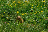 Young Prairie Dog in Heaven