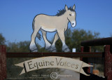 Equine Voices Rescue & Sanctuary