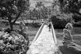 Bridge to a Palm Covered Paradise