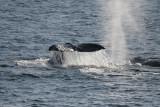 Whale Watching (¾¨Óã)