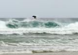 8676 Devon surfer-2.jpg